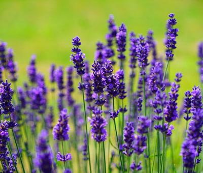 Aromaterapia. El Bienestar por los Aromas