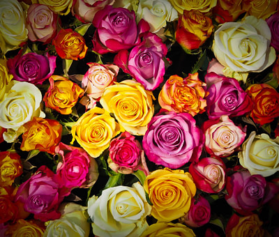 Las Rosas y sus Colores