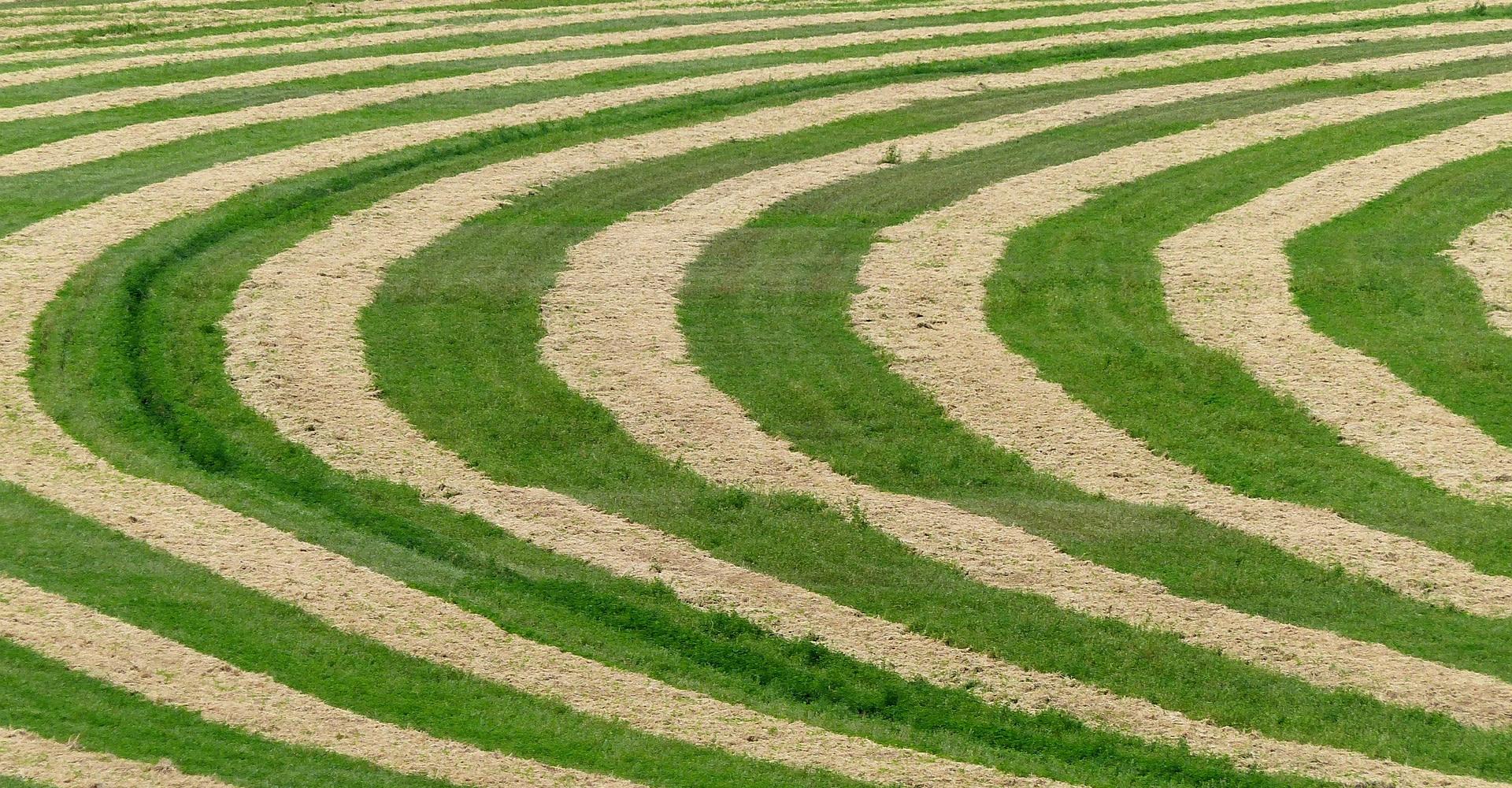 circulos de las cosechas